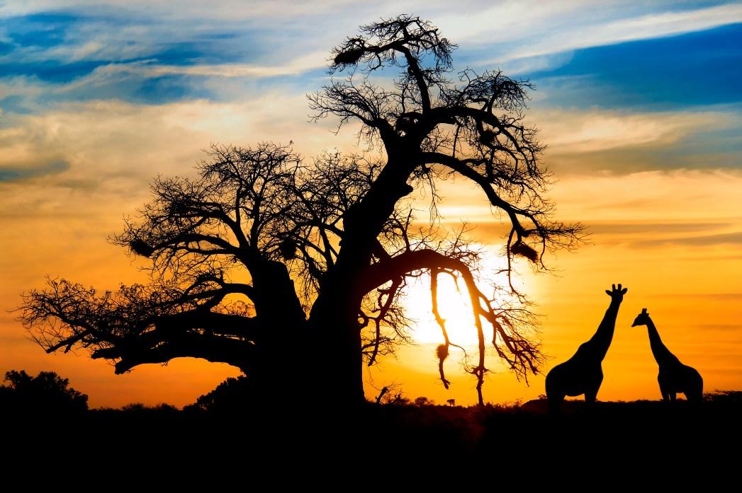 Para conferir o preço dos voos para Moçambique, é só clicar na foto!